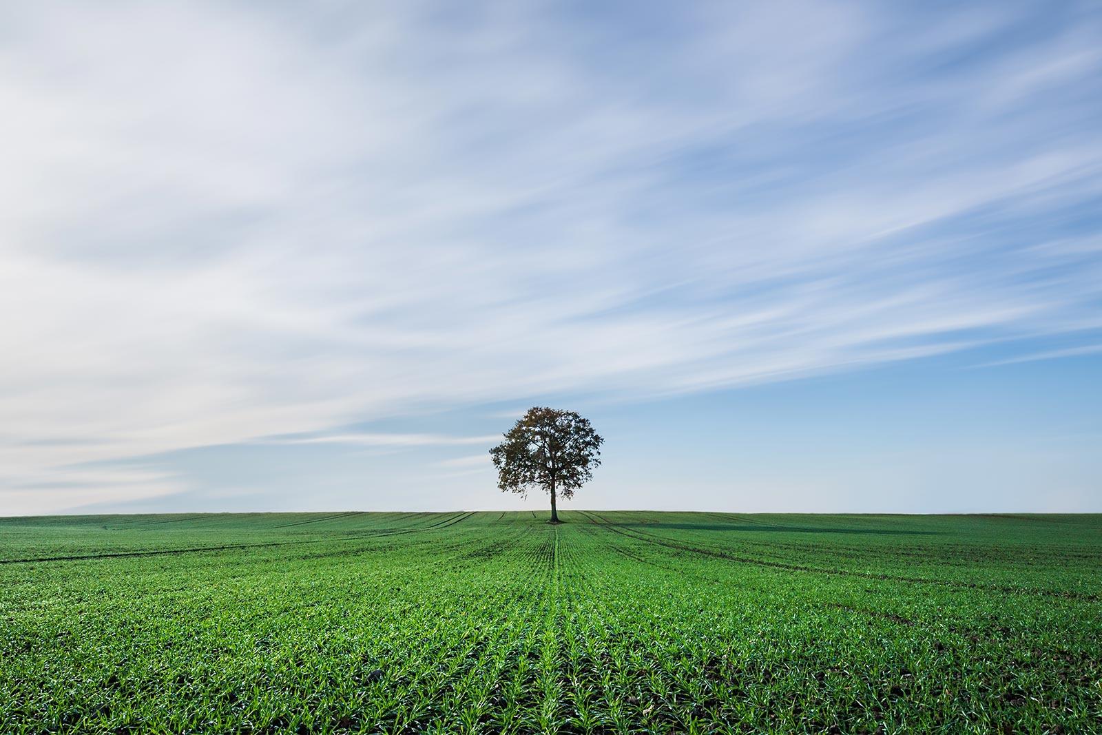 Kako bo Evropska unija dodelila sredstva za bolj zeleno Evropo?
