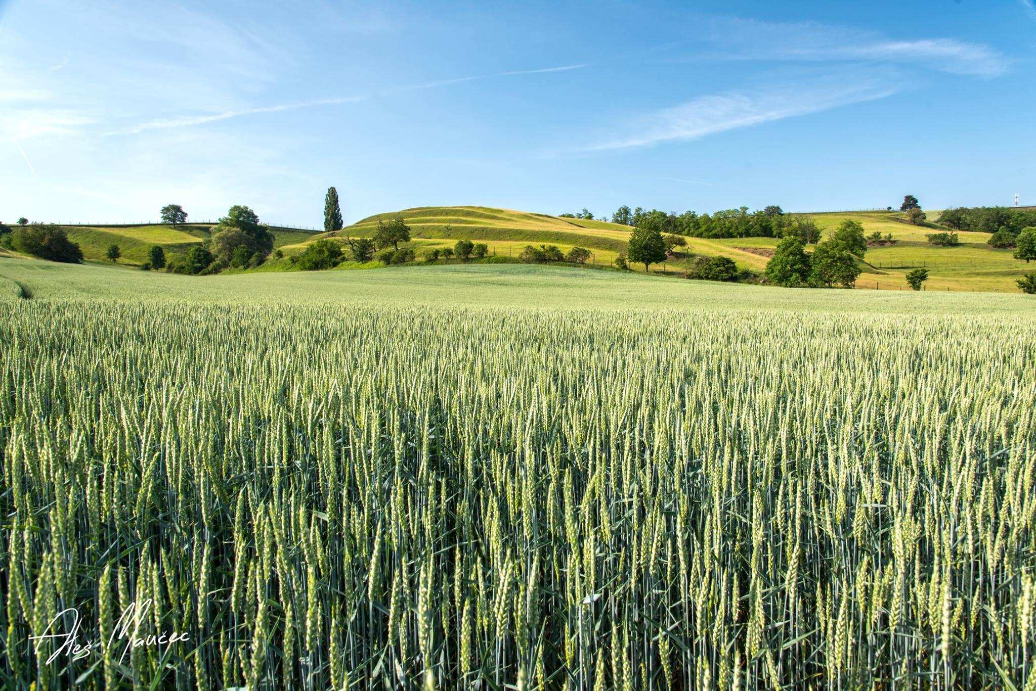 Okvirni terminski načrt objave kmetijskih razpisov v letu 2021